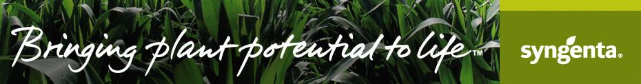 FarmaNews - Syngenta